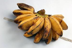 Les bananes suivent deux routes.